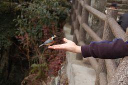 岐阜城で小鳥にえさをやる写真